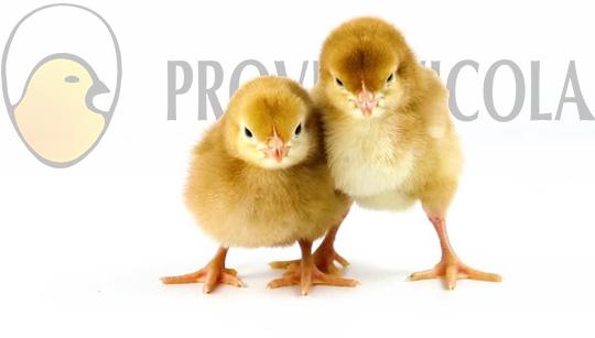 Nosotros - Prove-Avícola